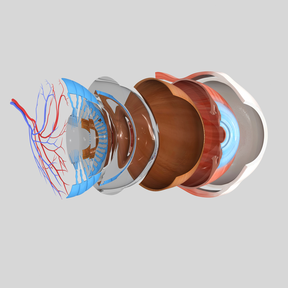 Retinal Detachment Patients Found to Experience Changes in Vision-Related Quality of Life After Cataract Surgery